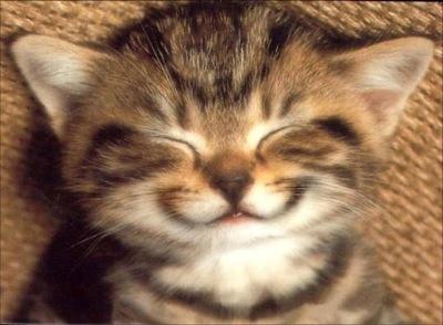 [Insolite] Les idées ne «ronronnent» pas quand il s'agit du chat!