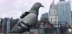 cover-r4x3w1000-57e16c9ad7cc5-un-des-pigeons-de-la-pigeon-air-patrol-de-londres