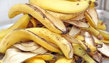 banane_846x492