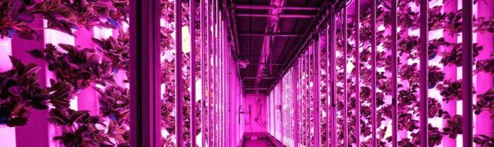 [Agriculture] 5 startups qui révolutionnent les méthodes deproduction