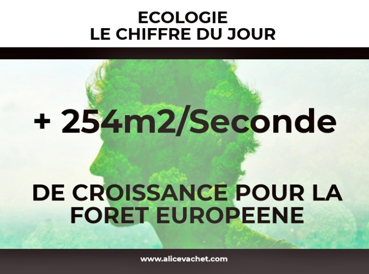 [Ecologie] Chiffre du Jour – Forêt🌳