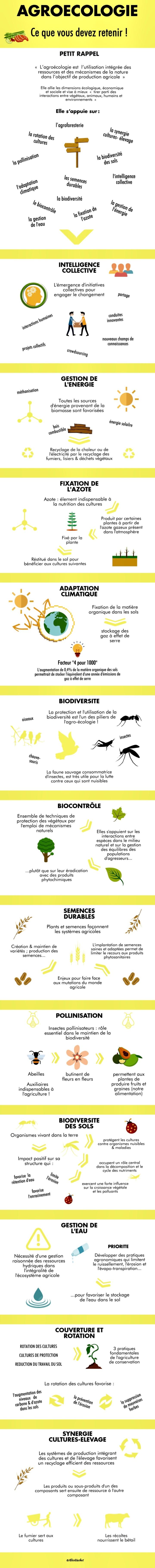 [Infographie] Agroécologie : Ce Que Vous Devez Retenir🌾