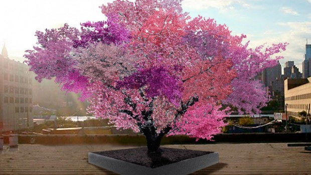 Un-arbre-qui-produit-40-fruits-différents-620x350.jpg